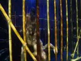 Kitty Katzu (Bamboo) caged underwater